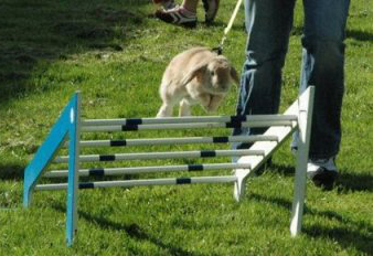 RabbitShowjumping